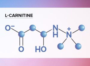 Does L-Carnitine help with weight loss?