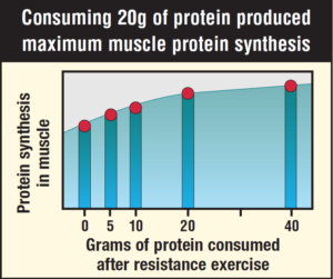 protein synthesis and protein intake graph